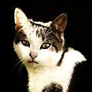 Brown tabby by Anthony Thomas