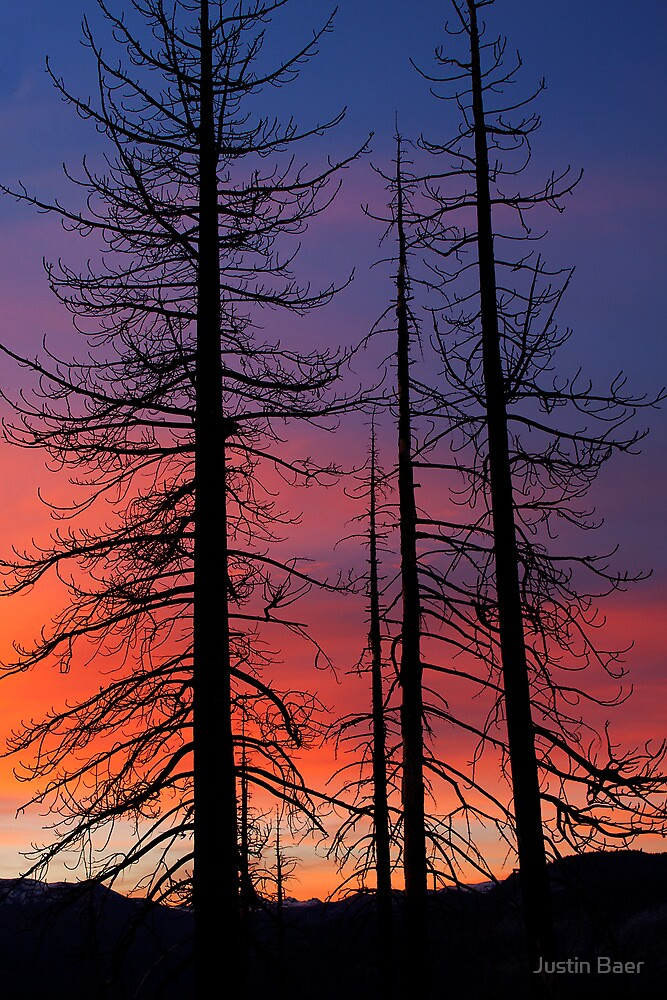 After the Fire by Justin Baer