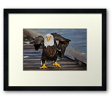 A Walk on the Wild Side Framed Print
