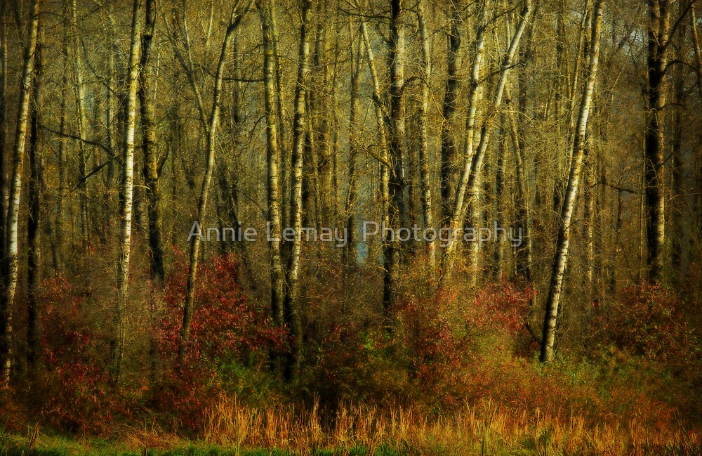 Fall by Annie Lemay  Photography