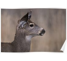 Yearling Doe Poster