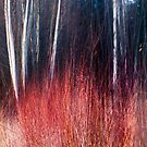 Thicket willow by natans
