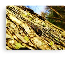 Box Elder Canvas Print