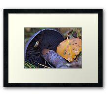 A slug at his work Framed Print