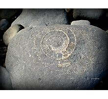 Fossil on Monmouth Beach Photographic Print