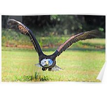 """Bald Eagle Headed Right For Me  *""""RUN""""* Poster"""