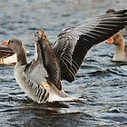 I must go where the wild goose goes by Alan Mattison