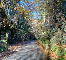 The Road to Finsthwaite by Jamie  Green