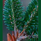 Christmas tree / Christmas card by finnarct