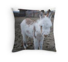 Six-week old Donkey Throw Pillow