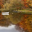 Autumn; a time for reflection by Shaun Whiteman
