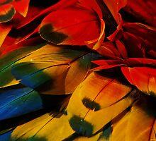 Macaw Rainbow by lilcanuk