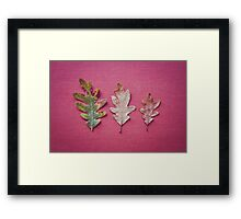 Three Leaves Framed Print