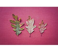 Three Leaves Photographic Print