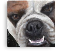 "Bull Dog ""Make My Day"" by Mary Hughes Canvas Print"