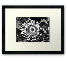 Sunflower Fields Forever Framed Print