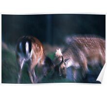 Fighting fallow deer Poster