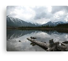 Snowy and crisp - even for the geese, Vermillion Lake, Canada Canvas Print