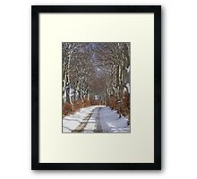 Winter Beech Avenue Framed Print