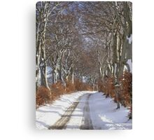 Winter Beech Avenue Canvas Print