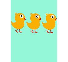 Cute chicks Photographic Print
