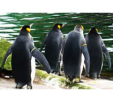 Penguin Parade, Edinburgh Zoo Photographic Print