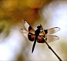Dragonfly by dirtshoe