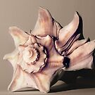 Small Conch Shell by Jay Reed