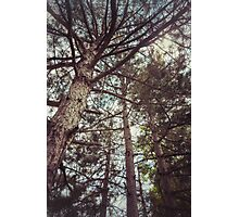 The Pinewood Photographic Print