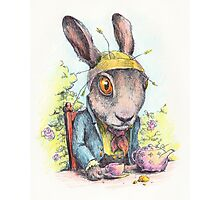 March Hare in May Photographic Print