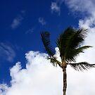 Palm by Chris  DeLorenzo