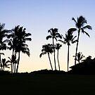 Palm Silhouette  by Chris  DeLorenzo