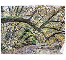 Autumn at Skippool Creek .  Poster