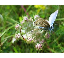 Just passing time, macro of butterfly on flower Photographic Print