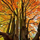 Autumn by Lea Valley Photographic