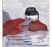 Ruddy Duck by Phyllis Dixon