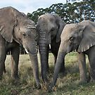 Trio of African elephants  by Anna Phillips