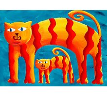 Curved Cats Photographic Print