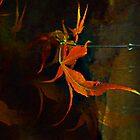 Maple ballet by Dulcina