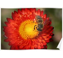 I bee reading this paper (daisy) Poster