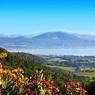 Saint Tropez Bay, View from Gassin by Atanas Bozhikov NASKO