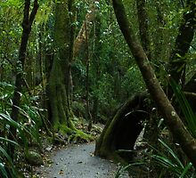 Walkway at Best of All Lookout - Springbrook N.P by Jordan Miscamble