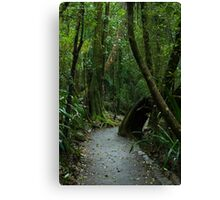 Walkway at Best of All Lookout - Springbrook N.P Canvas Print