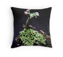 UNK Cladonia Species Throw Pillow