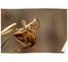 Acrobatic Arachnid Poster