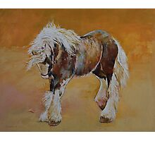 Gypsy Pony Photographic Print