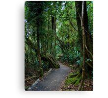 A Path through the Forest Canvas Print