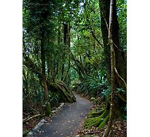A Path through the Forest Photographic Print