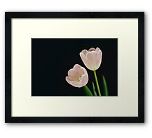 Two Tulips on Black Framed Print
