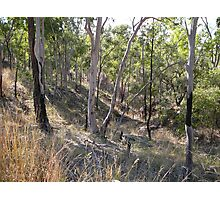 Dry and Rugged Terrain in the Australian Bush Photographic Print